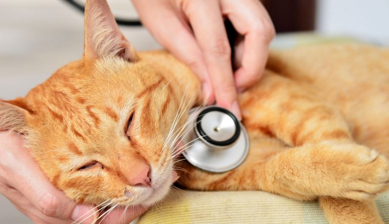 La santé de votre animal domestique