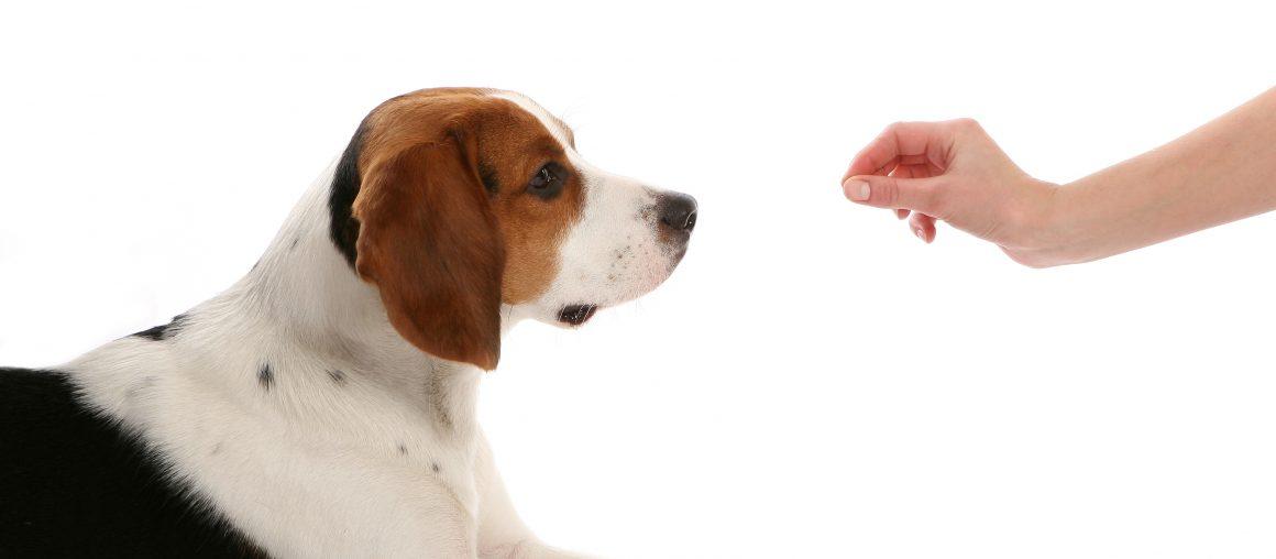 Comment bien choisir un école d'obéissance pour votre chien?