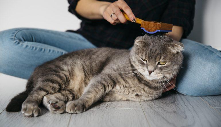 Conseils pour toiletter votre chat